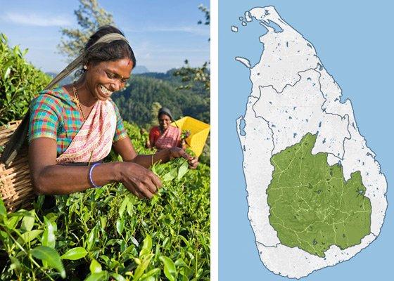 Канди и высокогорье - регионы Шри Ланки