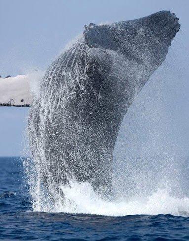 Наблюдение за китами в Мириссе