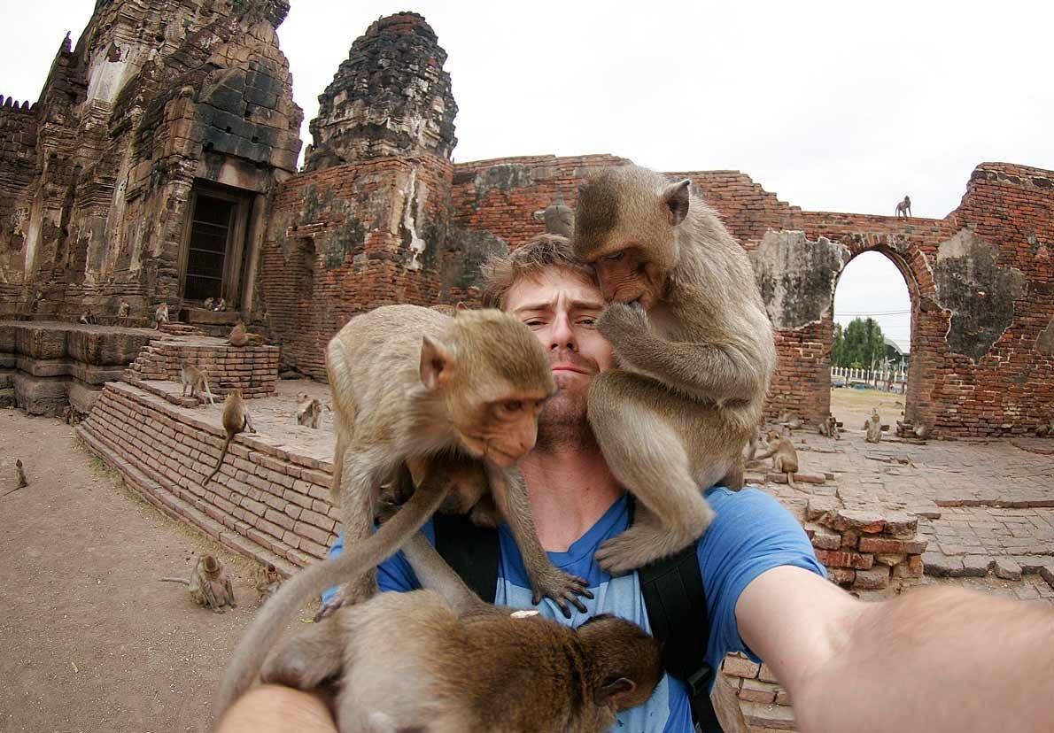 В храме обезьян, Лопбури