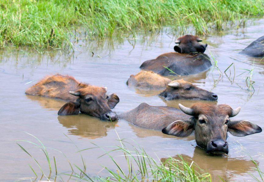 Национальный парк Кауддула