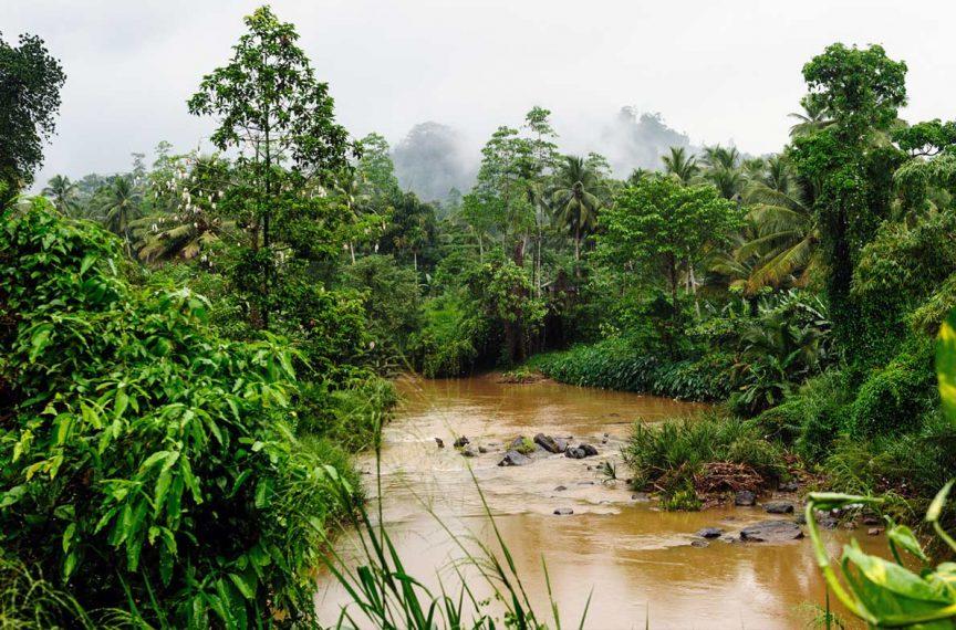 Наблюдение за дикими животными — лучшие национальные парки Шри Ланки